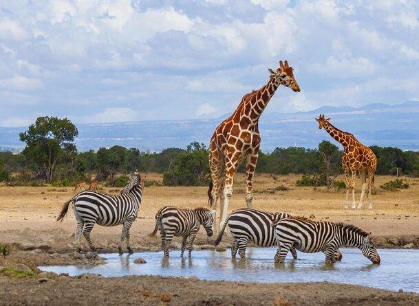 Ol Pejeta Wildlife Conservancy
